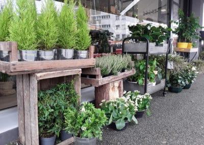 Plantes extérieures