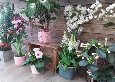 Plantes vertes ou fleuries