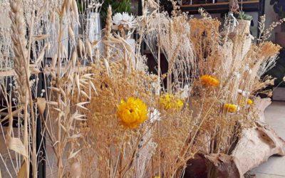 Les fleurs séchées, belles dans la durée